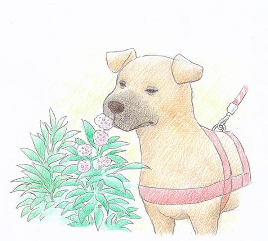 byron_cachorro_passeando.jpg